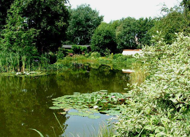 Toegepaste beplanting in de vijver vijverflora hellendoorn for Zwemvijver benodigdheden