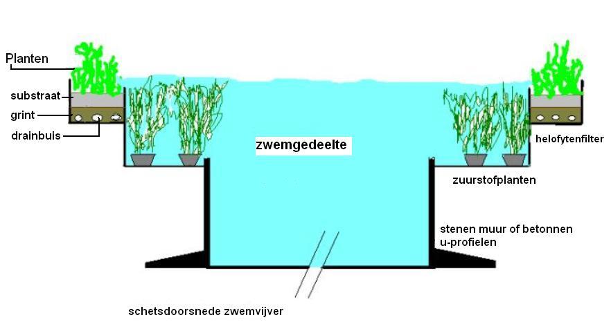 Zwemvijver vijverflora hellendoorn for Zwemvijver doe het zelf