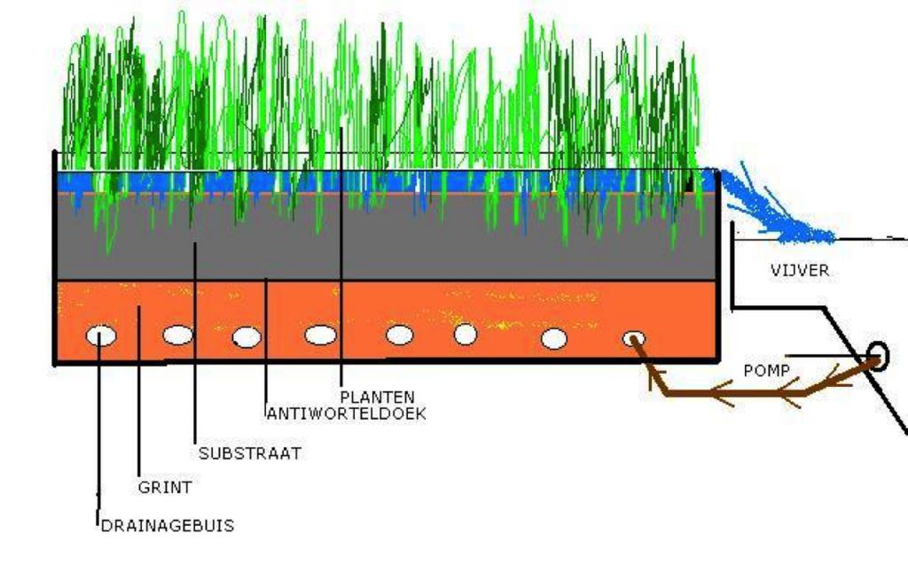 Aandachtspunten vijverflora hellendoorn for Zwemvijver benodigdheden